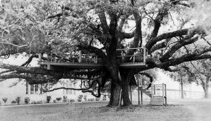 Friendship Oak, Gulf Park College